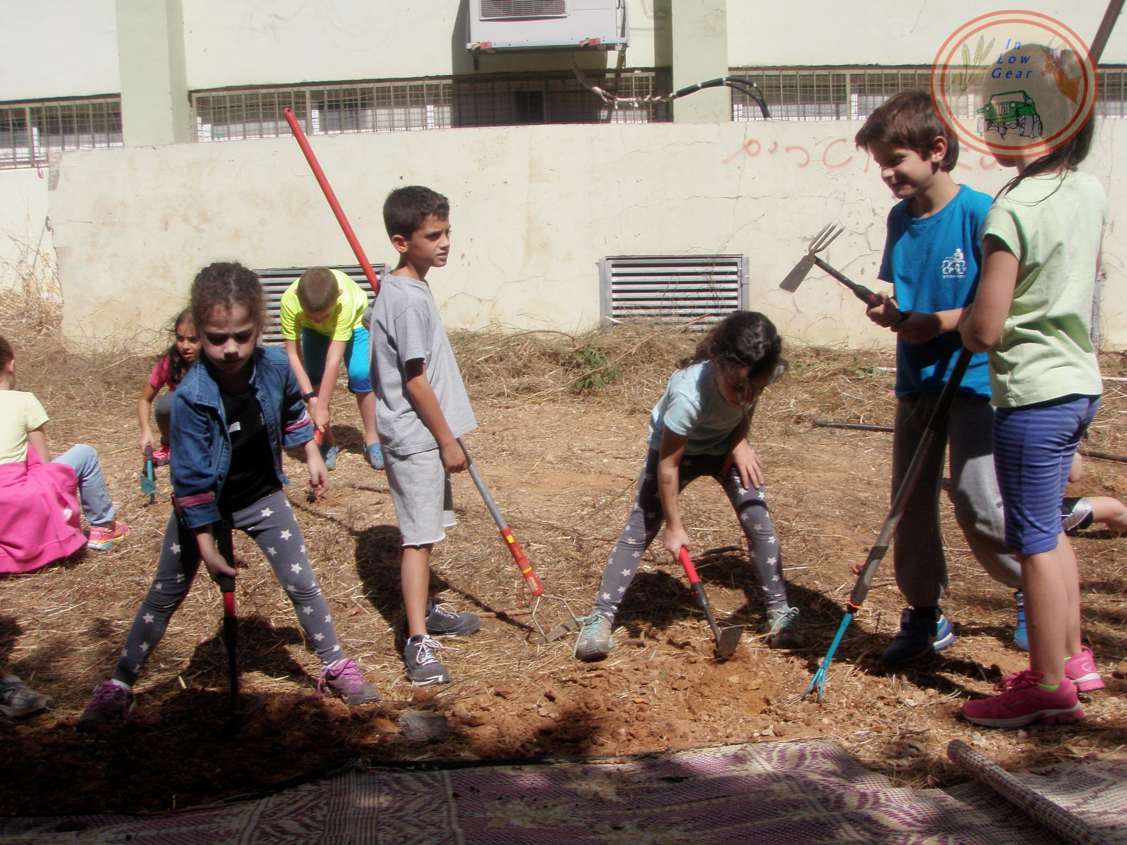 פרמקלצ'ר לילדים: לומדים ומתמחים עם כלי העבודה