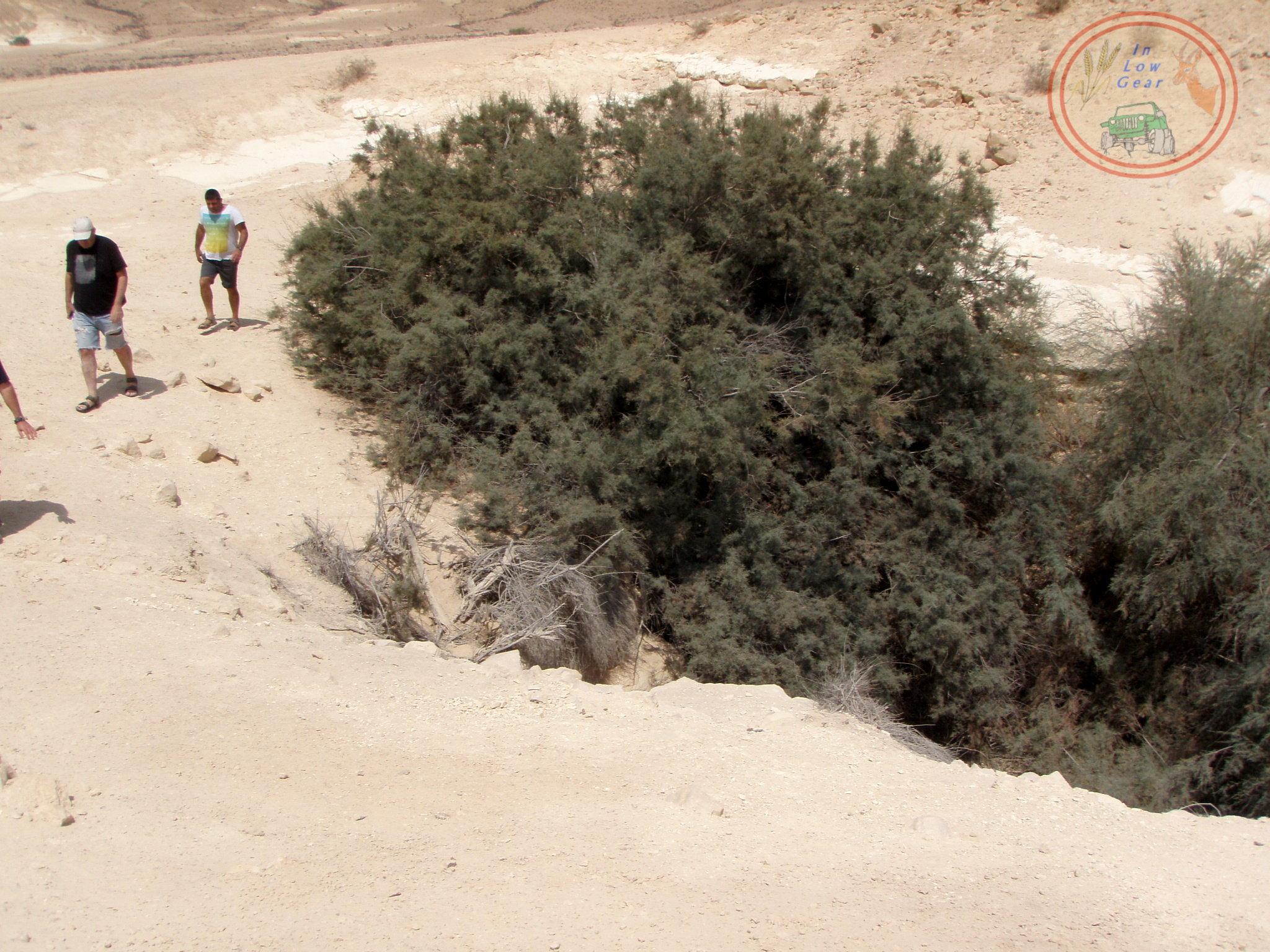 A desert Tamarix pointing at a large water hole Negev desert jeep tours. אשל מצביע על מארורת מים בהר הנגב טיולי ג'יפים
