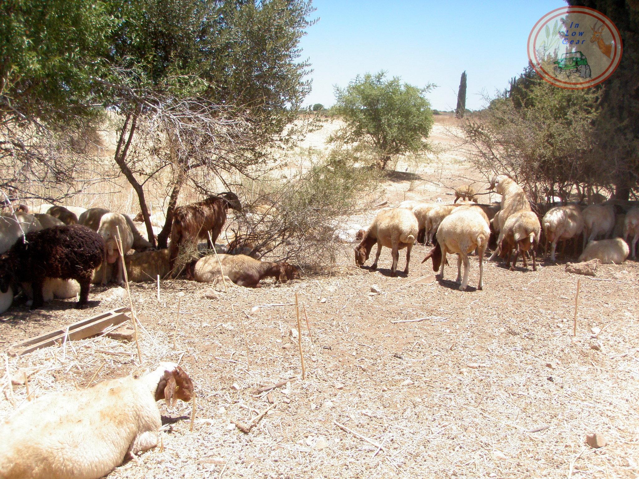 Haella wadi jeep tours.